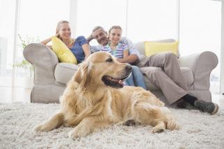 Saiba como evitar que seu cão tenha fraturas dentro de casa