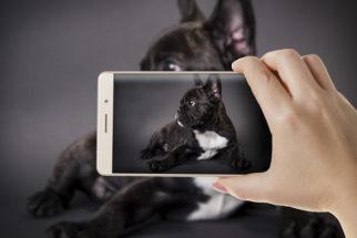 Não fotografe seu cão de qualquer jeito! Aprenda a forma correta