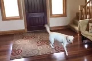 Garoto e sua cadela brincando de esconder é muita fofura para um dia só!