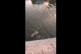 Oficial de polícia resgata cãozinho que caiu em canal de água