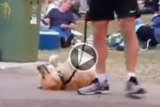 Para rir: Cadela faz 'show' ao se recusar ir embora de parque