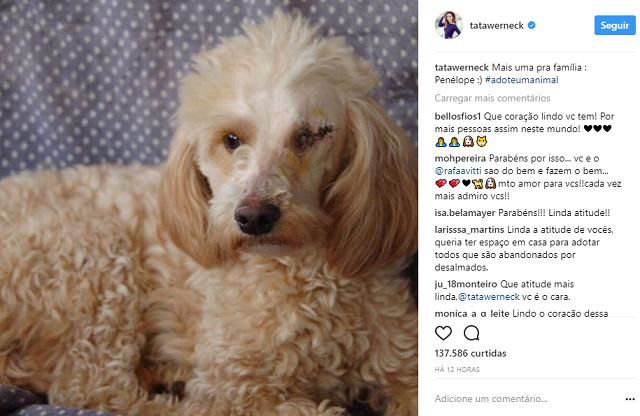Após adotar cão deficiente, Tatá Werneck não se contenta e acolhe cadelinha!