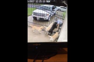Homem flagra por câmera de segurança carteiro fazendo carinho em cães