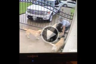 Tutor flagra por câmera de segurança carteiro fazendo carinho em cães