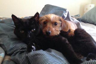 Incríveis fotos que mostram o convívio entre cães e gatos
