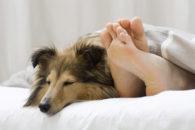 Pesquisa revela que grande parte dos tutores dorme junto com seus cachorros