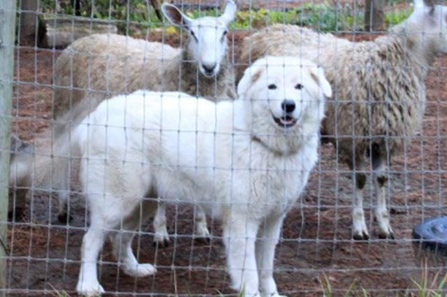Justiça determina que cachorros tenham cordas vocais tiradas