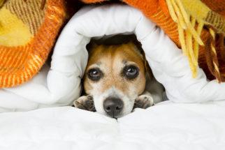 Frio favorece o aumento de alergias nos cães. Como prevenir e tratar