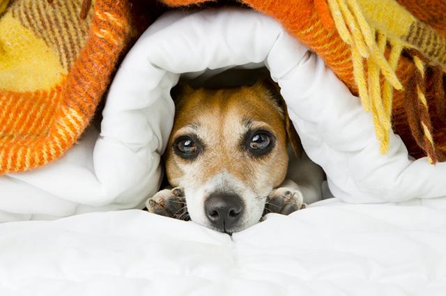 Ficando muito tempo dentro de casa o cachorro pode desenvolvimento alergias mais facilmente