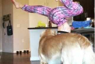 Hilário: Cãozinho 'anti-fitness' nunca deixa tutora treinar em paz