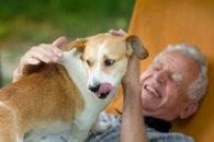 Pesquisa revela que vira-lata é o cachorro mais querido entre os brasileiros