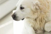 Câncer em cachorro: Confira sintomas, como prevenir e formas de tratamento