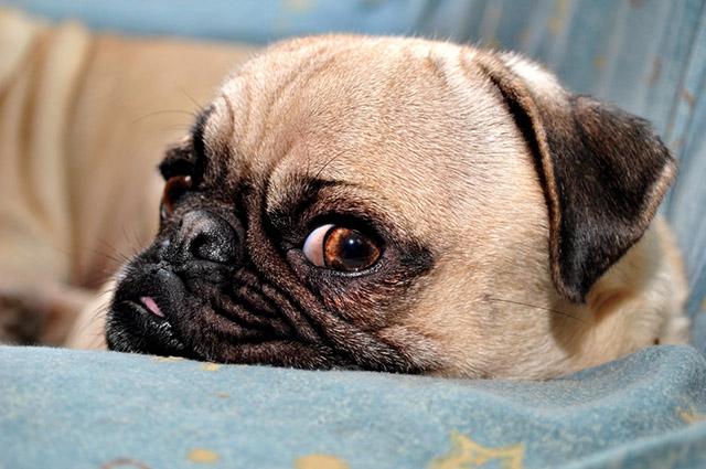 Abraçar, provocar, passear com pressa e até mesmo interromper o sono, são algumas das situações que irritam o cachorro