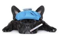 Cachorro com dificuldade para respirar, o que fazer?