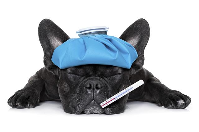 As doenças respiratórias são mais facilmente transmitidas nos climas secos e frios