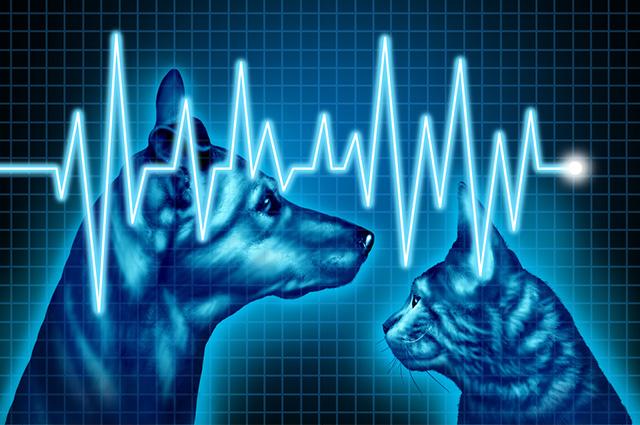 Os seguros de animais domésticos oferecem pacotes diferentes, com preços e serviços diversificados