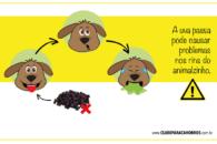 Uva passa pode ser um perigo para os cachorros