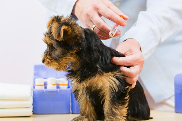Para evitar que o pet adquira doenças respiratórias é importante que o sistema imunológico esteja forte