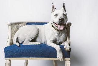 Móveis para cachorros: confira modelos