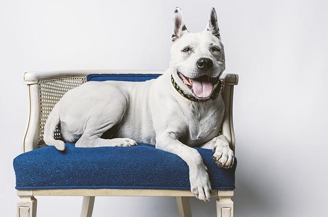 Os móveis para cachorros podem ser usados pelos pets e pelos donos
