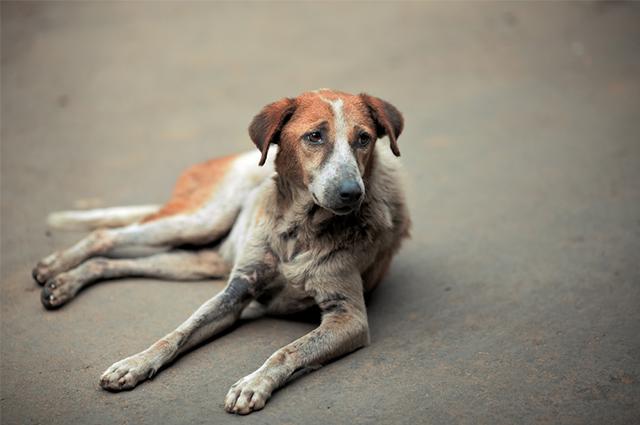 É preciso evitar, cada vez mais, o abandono de animais