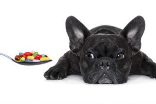 Sem complicação! Dê remédio ao cão usando filme oral