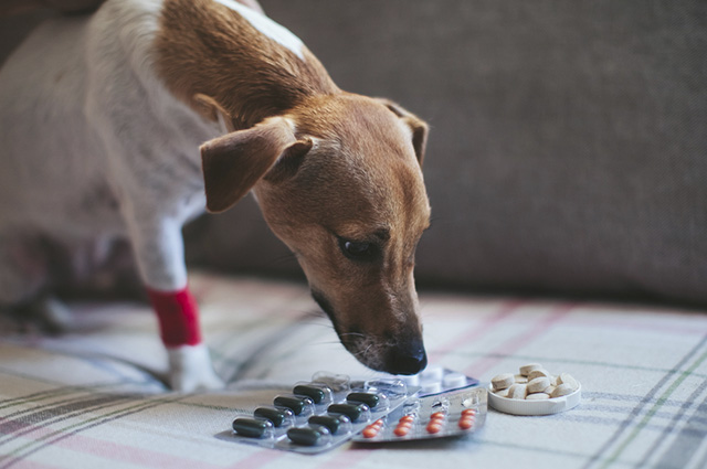 A hepatite viral canina é caracterizada por icterícia e hemorragias nas mucosas