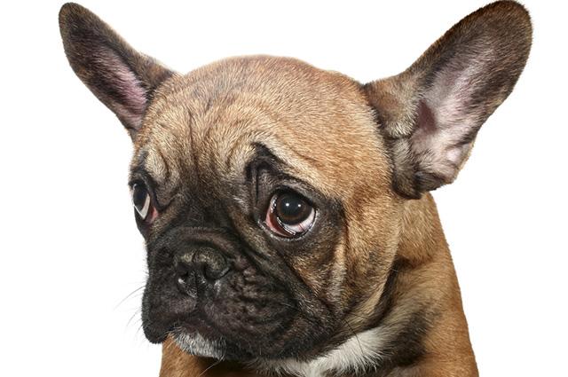 Após a castração, o pet fica mais calmo, não triste
