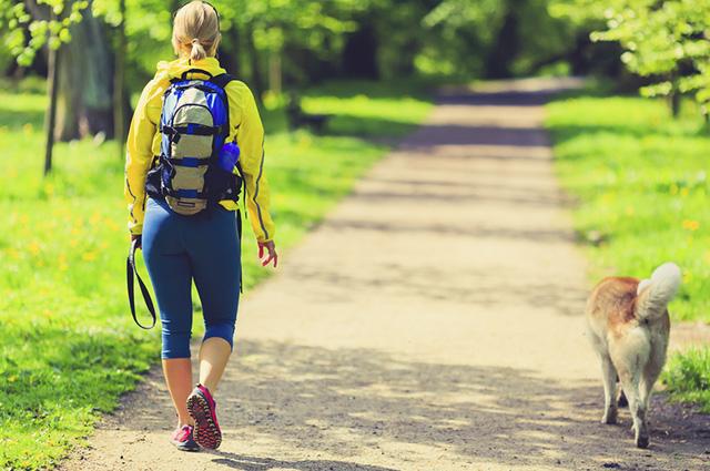 Para o pet passear sem coleira, é necessário ensinar alguns comandos