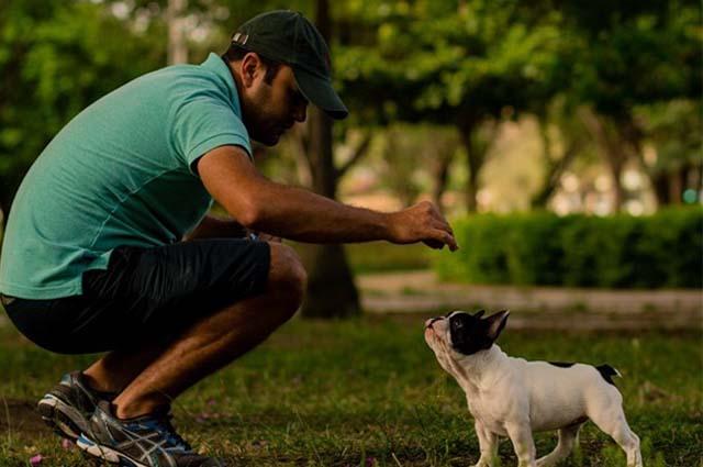 O adestrador recomenda paciência e atenção para ensinar ao pet