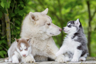 Raças de cães que se dão bem com outros animais
