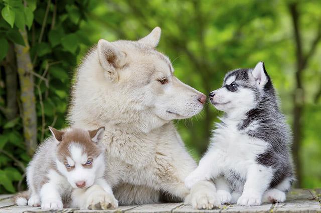 O mais indicado é que os cães passem pela socialização desde cedo