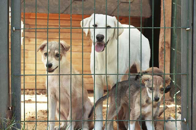 Adotar um cãozinho pode ajudar na superação da morte do pet