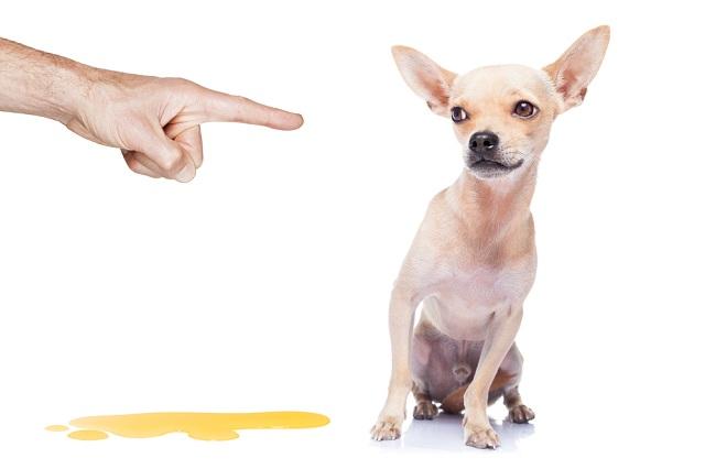 Existem técnicas que permitem que o tutor ensine o cão a fazer xixi e cocô no lugar certo