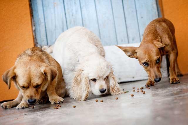 As rações naturais precisam estar de acordo com a necessidade nutricional de cada pet