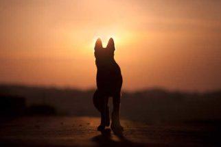 Como superar a morte de um cachorro?