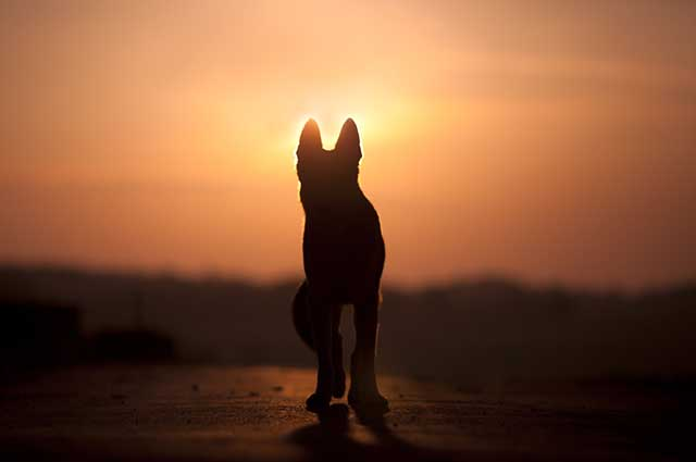Superar a morte de um cachorro pode levar um tempo, nunca se prive de chorar e sentir falta