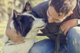 Mensagens para morte do cachorro de estimação