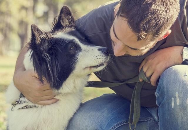 Mensagens Para Morte Do Cachorro De Estimação Clube Para Cachorros