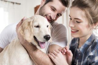 40 belas frases de 'cachorro, o melhor amigo do homem'