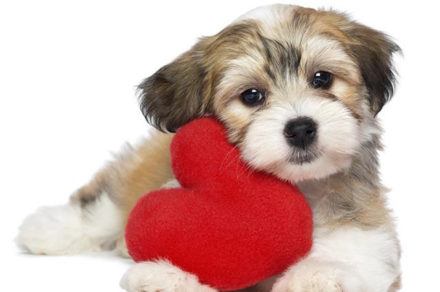 As frases sobre filhotinhos de cachorros podem ser criadas por você mesmo, basta se inspirar