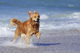 40 frases de cachorros felizes e animados