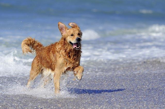 40 Frases De Cachorros Felizes E Animados Clube Para Cachorros