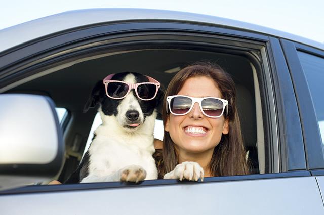 30 Frases Para Fotos De Cães Junto Com Mulheres Clube Para