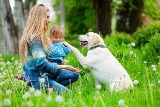 Conheça as raças de cães mais populares no Brasil e nos Estados Unidos
