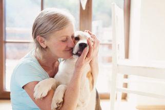 50 lindas frases de cães sobre amor e amizade