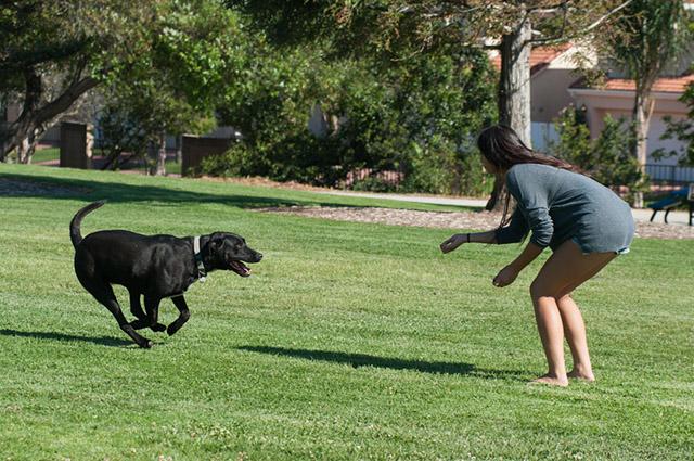 O tempo para acostumar o cachorro com o nome varia, uma vez que cada animal tem seu ritmo de aprendizagem