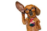 Saiba como acostumar o cachorro com o nome?