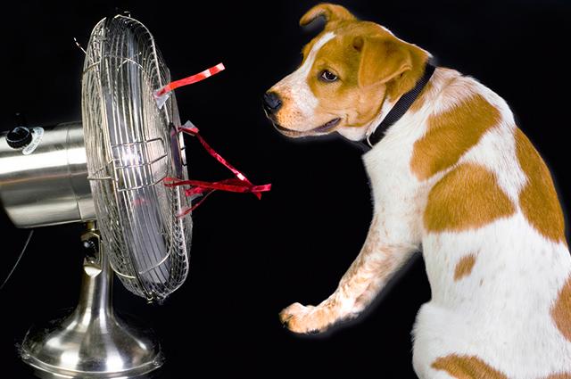 Além de cortar o pelo do cachorro para ajuda a diminuir o calor, ofereça mais água e ambientes ventilados
