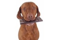 Chocolate para cachorro: existe algum saudável para o pet?
